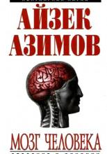 Человеческий мозг. От аксона до нейрона