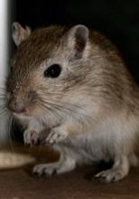 Укол в мышь